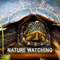 Nature Watching
