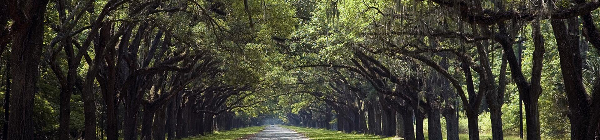 Wormsloe State Historic Site | State Parks & Historic Sites