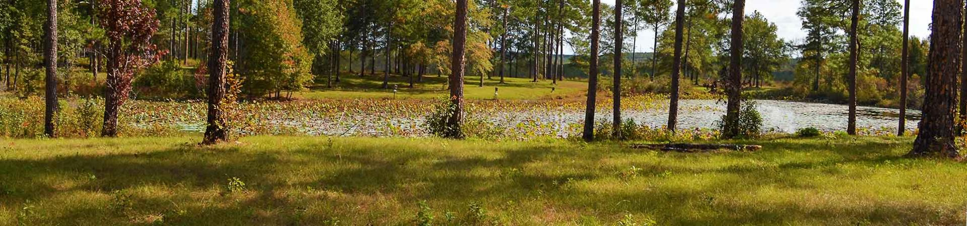 Camping Area and Pond