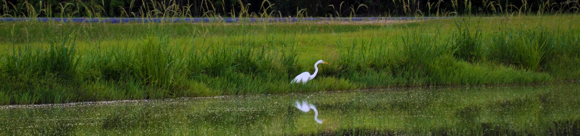 Bowens Mill Pond with Bird