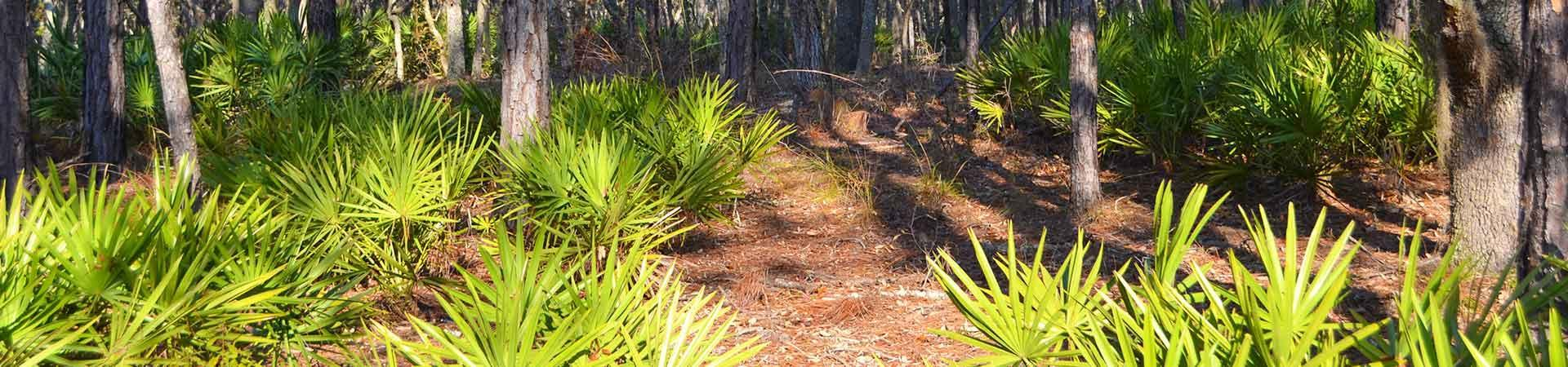 palmetto fronds at Griffin Ridge Wildlife Management Area