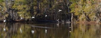 birds landing on the water at Phinizy Swamp Wildlife Management Area