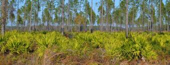 habitat and trees