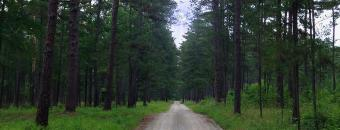 Road in WMA