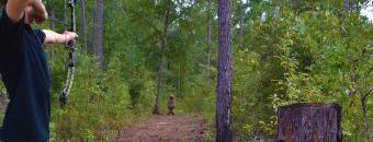 3D Bear Target in Woods