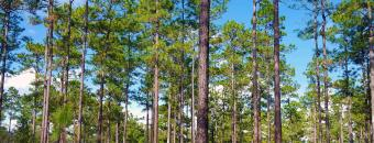 River Creek Woods