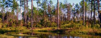 Sandhills Water and Treeline