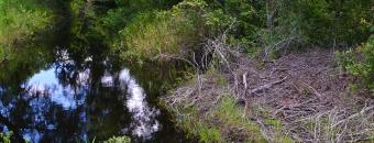 Sparks Cut Off Creek