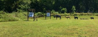 Walton Archery Range
