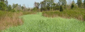 Clover and Rye Strip