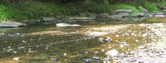 Sheffield Creek