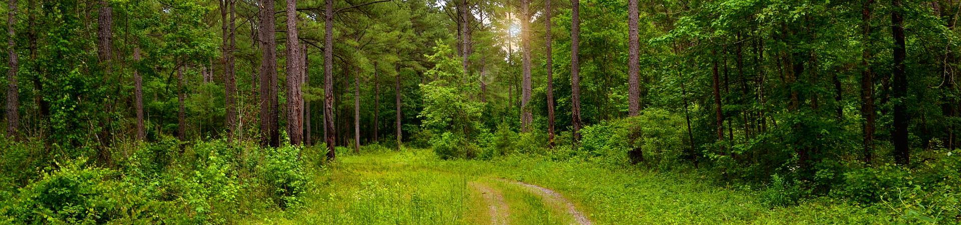 trees at Oaky Woods WMA