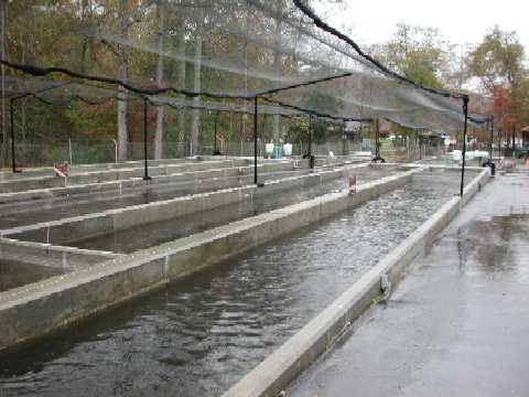 Raceways for Growing Trout