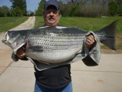 Terry McConnel's Georgia State Record Striped Bass